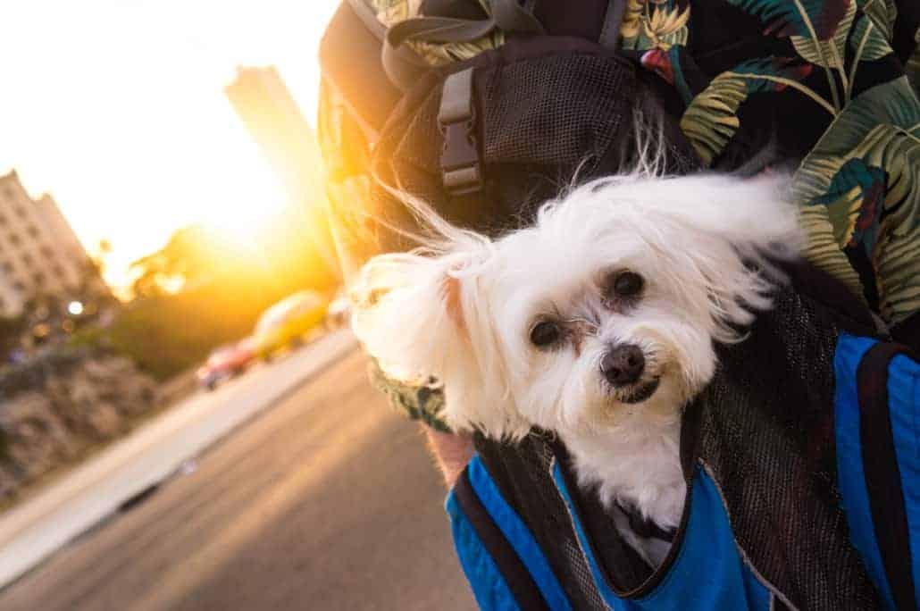 service dog in cuba